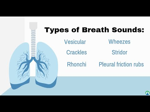 Reviewing Respiratory Sounds for the Audio Learners