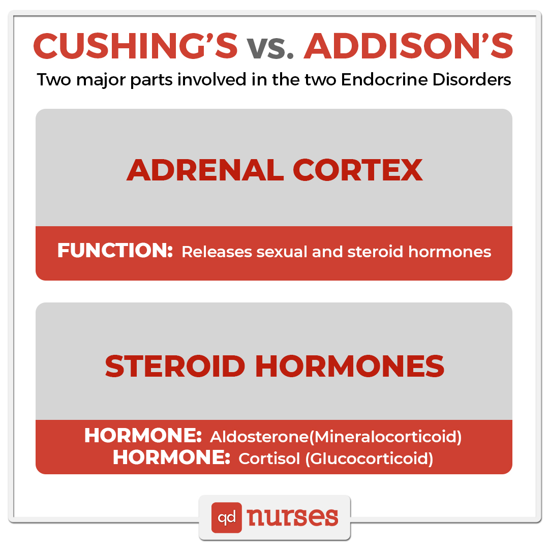 Cushing's vs Addison's - Two major parts involved in the two Endocrine Disorders